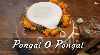 Pongal O Pongal: More Than A Harvest