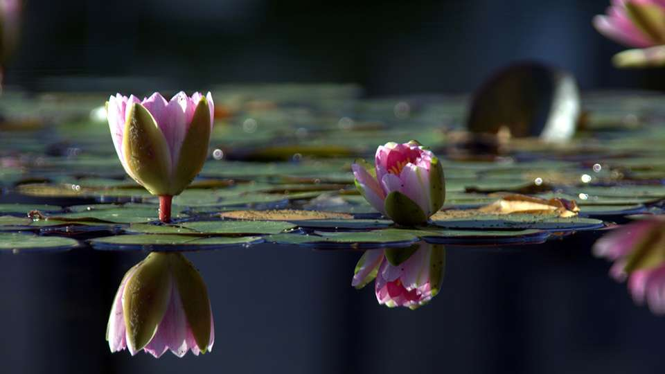 Balboa Lilies - Most important things in life to fulfill your potential