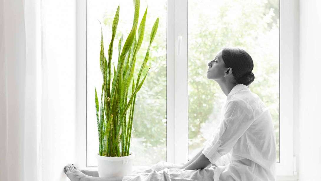 3 Helpful Plants to Purify the Air in Your Home