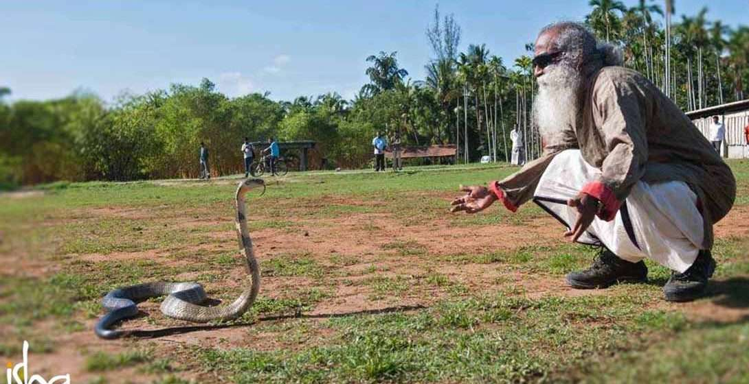 Snakes – Agents of the Devil or the Divine?