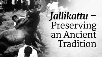 Jallikattu – Preserving an Ancient Tradition