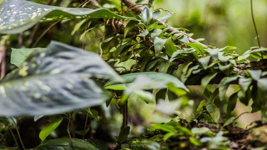 Ayahuasca and Parasitic Purging