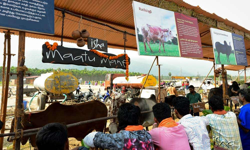 A display of indigenous Indian cattle breeds
